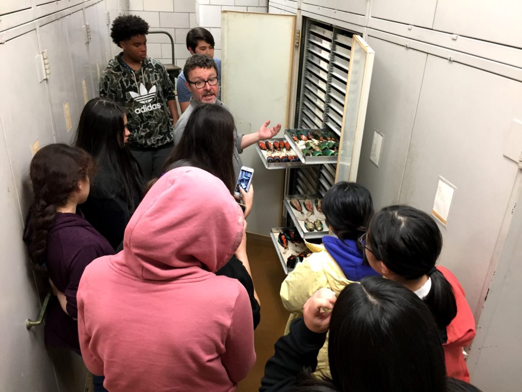 Visiting the Ornithology collections.